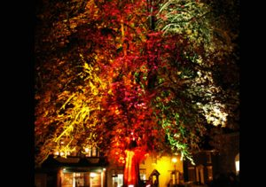 Lighting Trees and Landscaping